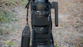 シグマ150-600mmスポーツの画像