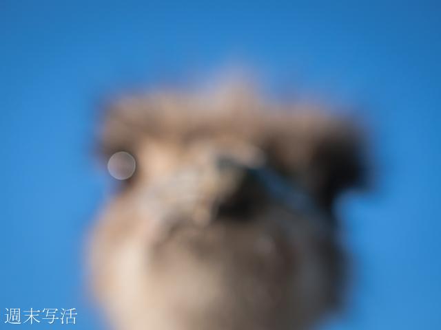 フォクトレンダーノクトンで撮影した画像