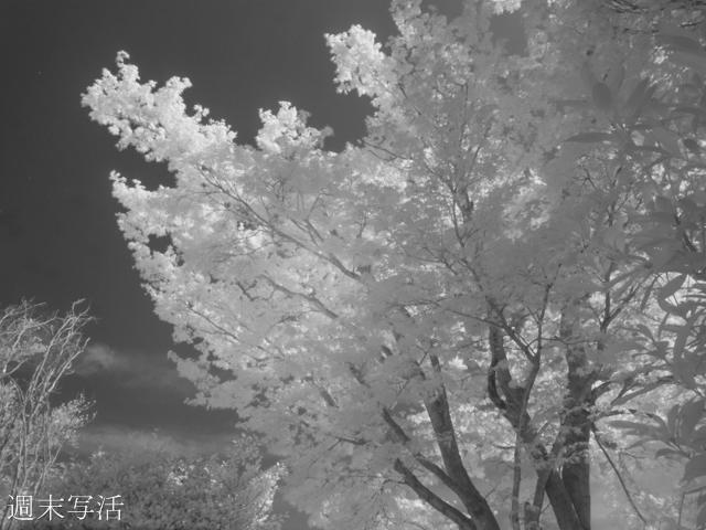 リコーGRデジタル4赤外線カメラでの作例