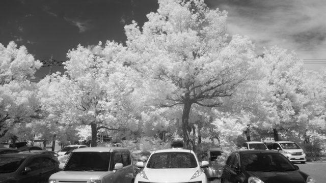 赤外線撮影した風景