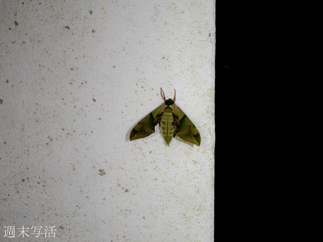 広角マクロで撮影している昆虫