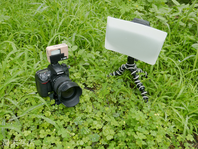 昆虫撮影でのフラッシュの使用方法