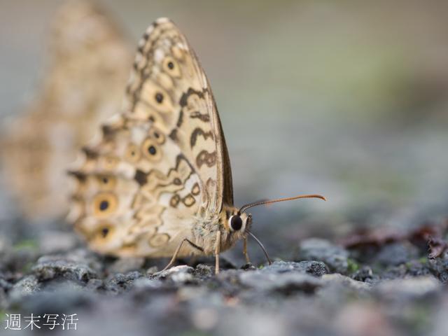 マクロレンズで撮影した昆虫写真