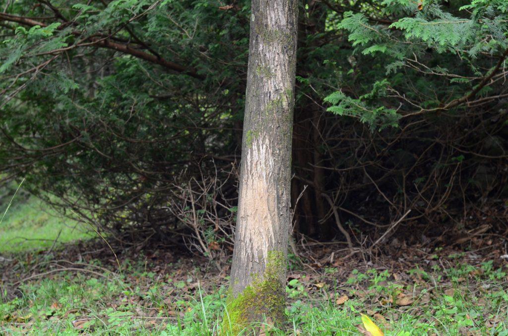 野生動物の腰かき用の木