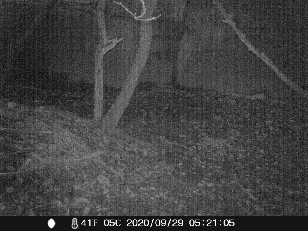 トレイルカメラで撮影した野生動物